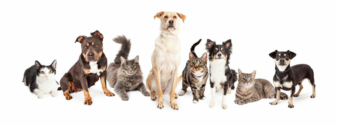 Cats and dogs in a line