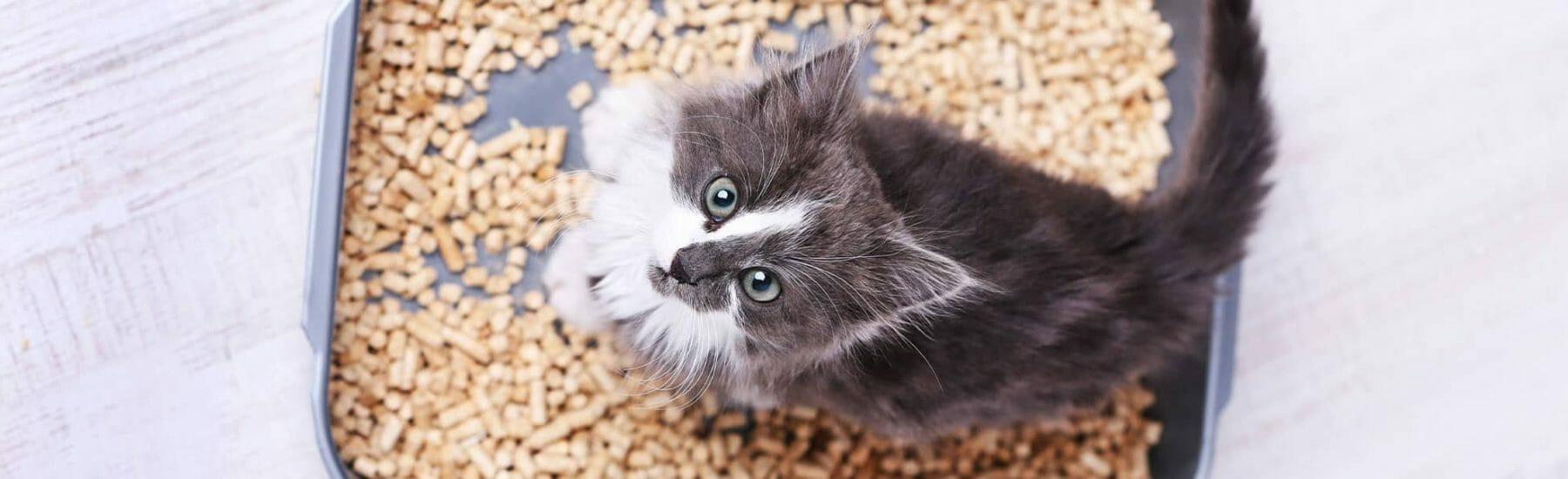 Kitten standing in a litter box