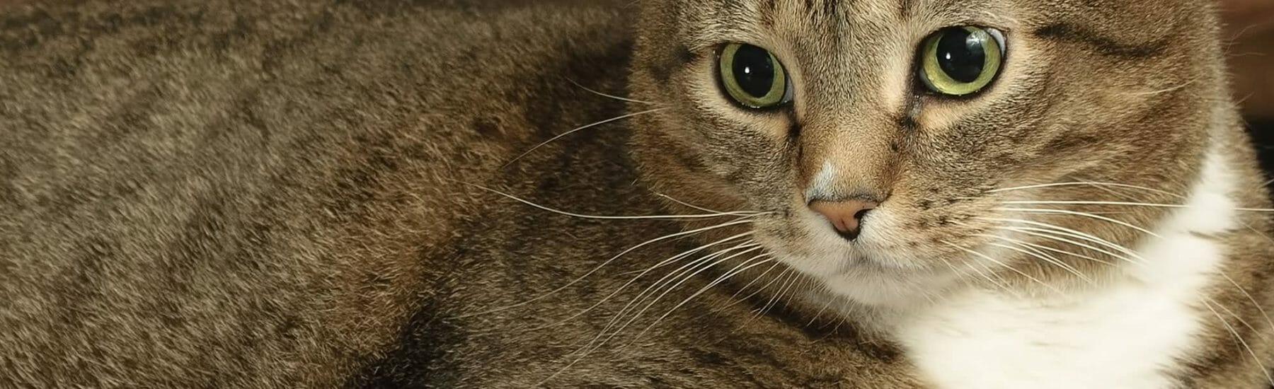 Close up of a cat looking to the left