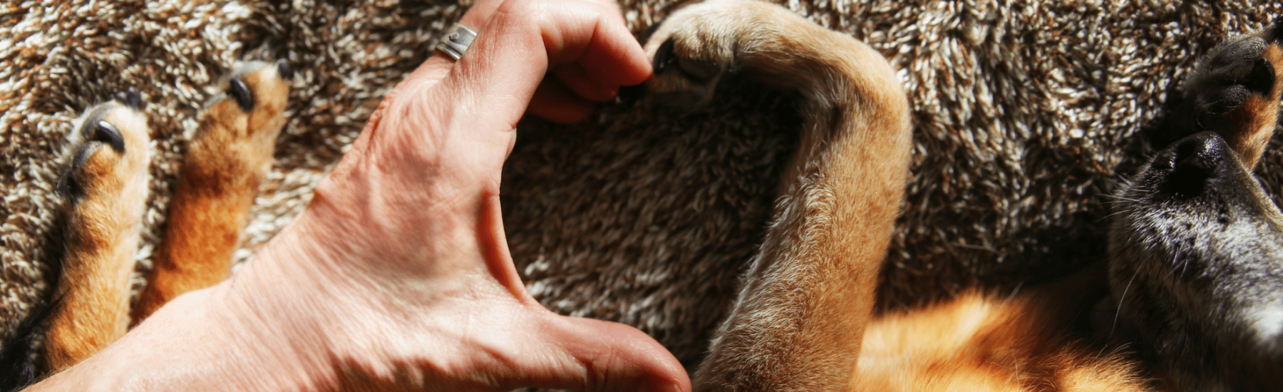 Human hand and dog paw forming a heart shape
